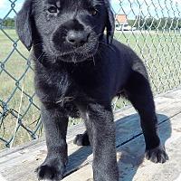 Adopt A Pet :: Clara - Terrell, TX