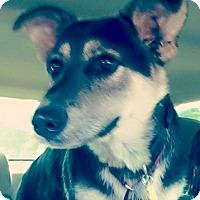 Adopt A Pet :: Harris - Greeneville, TN