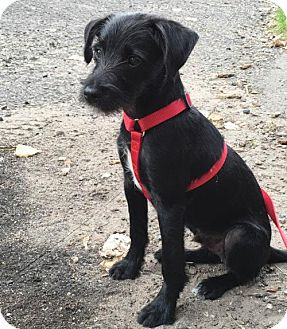 Terrier (Unknown Type, Medium) Mix Dog for adoption in Edina, Minnesota - Brody D160988: PENDING ADOPTION