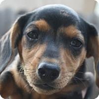 Adopt A Pet :: Bogey - Lodi, CA