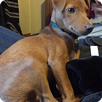 Adopt A Pet :: Sally Sue - Middlesex, NJ
