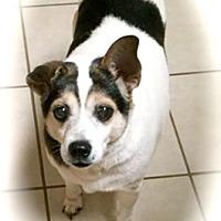 Adopt A Pet :: Cooper - Franklin, IN
