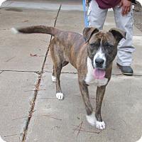 Adopt A Pet :: Jannie - Warrenton, NC