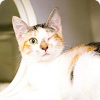 Adopt A Pet :: Daisy Duke - Austin, TX