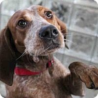 Adopt A Pet :: DIXIE - Pittsburgh, PA