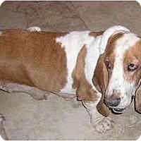 Adopt A Pet :: Chardonnay - Phoenix, AZ