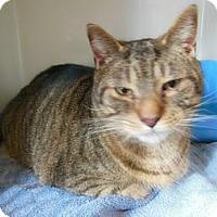 Adopt A Pet :: Vinny - N. Berwick, ME