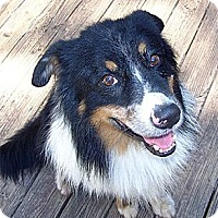 Adopt A Pet :: Anson - PENDING - Savannah, GA