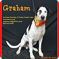 Adopt A Pet :: Graham - Plano, TX