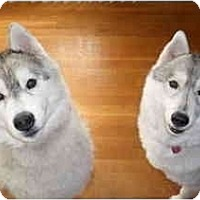 Adopt A Pet :: Zeus and Zoey - Belleville, MI