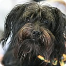Adopt A Pet :: Chanel