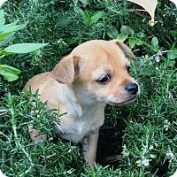Adopt A Pet :: Stanley - La Habra Heights, CA