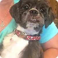 Adopt A Pet :: Lita - LEXINGTON, KY