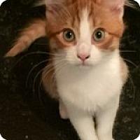 Adopt A Pet :: Winston - Novato, CA