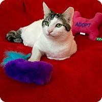 Adopt A Pet :: Gizmo - Phoenix, AZ