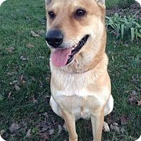 Adopt A Pet :: Sophia(located in NC) - Cranston, RI