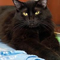 Adopt A Pet :: Speedy - Tucson, AZ