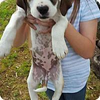 Adopt A Pet :: Cindy~adopted! - Glastonbury, CT