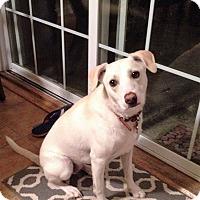 Adopt A Pet :: Biggie - Virginia Beach, VA