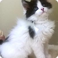 Adopt A Pet :: Dolly - Oswego, IL