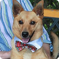 Adopt A Pet :: Scamp-PENDING - Garfield Heights, OH