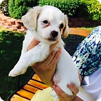 Adopt A Pet :: Melanie - Beavercreek, OH