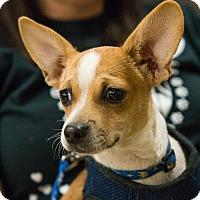 Adopt A Pet :: Ty - Grass Valley, CA