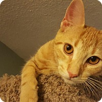 Adopt A Pet :: Theo the Great - Oxford, CT