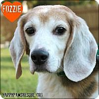 Adopt A Pet :: Fozzie - South Plainfield, NJ