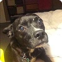 Adopt A Pet :: Butch - Aurora, IL