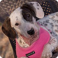 Adopt A Pet :: Yuki - Freeport, FL