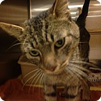 Adopt A Pet :: Bonus Cat - Woodstock, GA