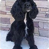 Adopt A Pet :: Kirby - Sugarland, TX