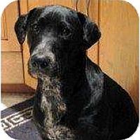 Adopt A Pet :: Cory - Altmonte Springs, FL