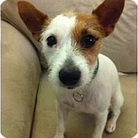 Adopt A Pet :: Chloe in Houston - Houston, TX