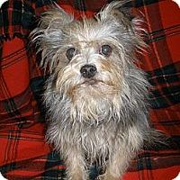 Adopt A Pet :: Elton - Cantonment, FL
