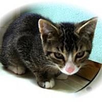 Adopt A Pet :: Orson - Shelton, WA