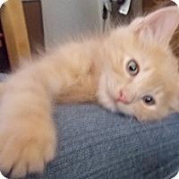 Adopt A Pet :: Saturn - North Highlands, CA