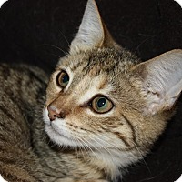 Adopt A Pet :: Bernie (LE) - Little Falls, NJ
