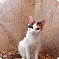 Adopt A Pet :: Spots - Oviedo, FL