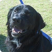 Adopt A Pet :: Dooley - Lockhart, TX