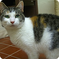 Adopt A Pet :: Callie - Long Beach, NY