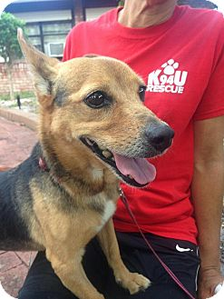 Shepherd (Unknown Type) Mix Dog for adoption in Coral Springs, Florida - Destiny