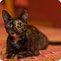 Adopt A Pet :: Minnie - St. Louis, MO