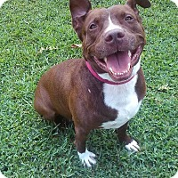 Adopt A Pet :: Mason - Palm City, FL