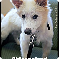 Adopt A Pet :: Ragnar - Elmhurst, IL