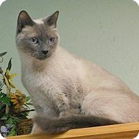 Adopt A Pet :: Squeeks - Davis, CA