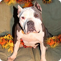 Adopt A Pet :: Dottie - Toluca Lake, CA