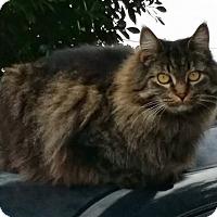 Adopt A Pet :: Marisa - Gilbert, AZ