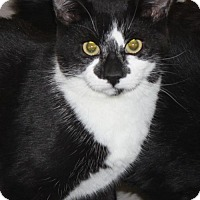 Adopt A Pet :: White Face - Burlington, WA